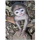 Cuadros Diamantes 5D - Little Monkey Animal 5D DIY Diamond Painting - Full Square Redondo Bordado De Diamantes Punto De Cruz Pintura por Números Arts Craft para El Hogar Decoración De Arte De Pare