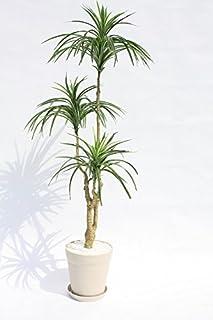 インテリアグリーン人工観葉植物、新ユッカ120・光触媒製品受け皿付き
