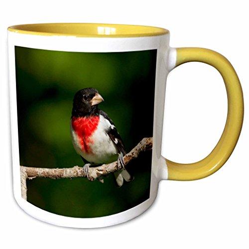 3dRose USA, Rose-Brust Grosbeak Bird-US39 JMC0087-Joe und Mary Ann McDonald, Tasse, 325 ml, gelb/weiß