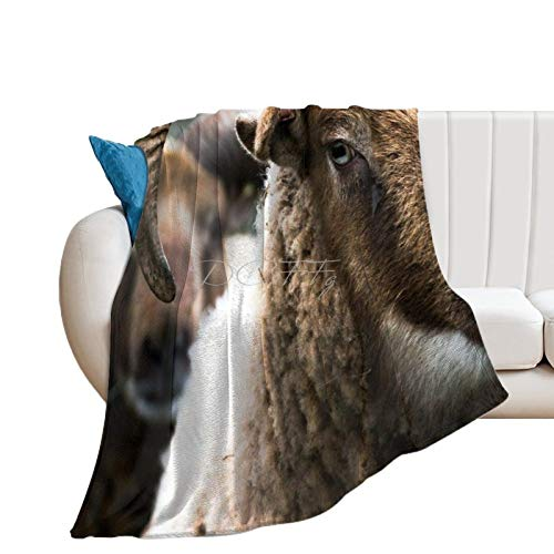 Throw Blanket for Couch Flannel Blankets Awesome Big Horn Sheep Farm Animal Lightweight Ultra Soft for All Season Farmhouse Decorative Blanket for Bed Sofa Travel Birthday Gift 50x60 Inch