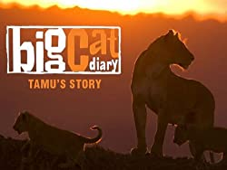 Big Cat Diary - Tamu's Story