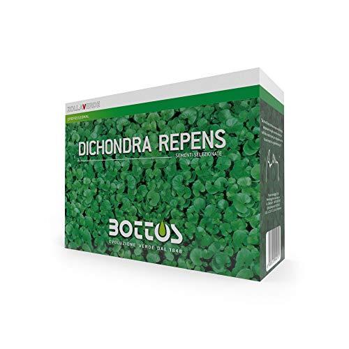Bottos Semences pour la pelouse Dichondra Repens 0,5 kg
