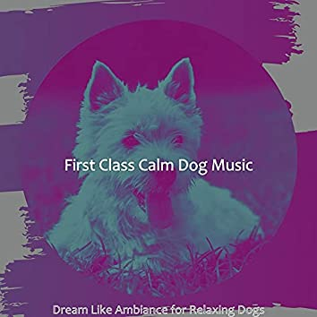 Dream Like Ambiance for Relaxing Dogs