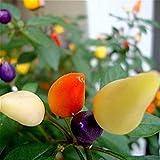 家宝タイ日唐辛子の種トウガラシトウガラシ観賞植物チリ種子100個の木の庭の野菜種子マルチカラー用