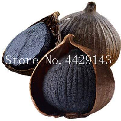 Kalash Neue 100 Stück Knoblauch Gemüsesamen für Gartendunkelbraun