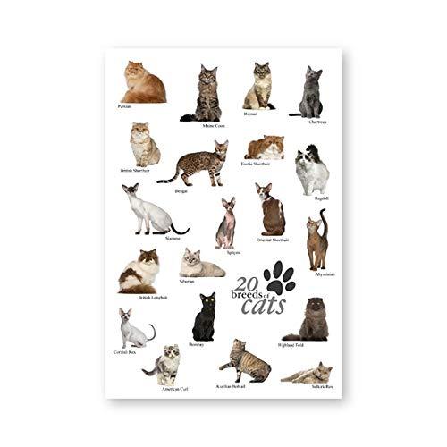 MXmama Katzenrassen Sammlung Poster und Drucke Tierhandlung Wandkunst Dekor Katzenrassen Bildung Illustration Bilder Leinwand Malerei -20x28 Zoll ohne Rahmen