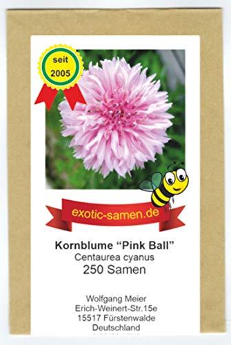 Centaurea cyanus - Bienenweide - Pinke Kornblume