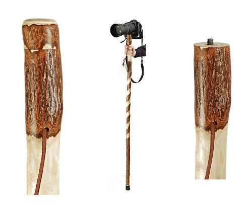 "Brazos 55"" Handcrafted Twisted Sassafras Photographer's Wood Walking Stick with Camera Mount for Men and Women, Made in the USA"