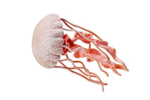 Incredible Creatures: Jellyfish