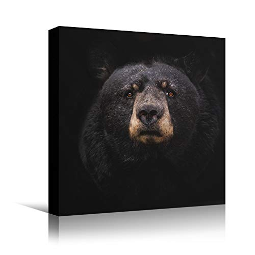 bestdeal depot Bear VIII Animals Bear Expressive Living Room Multicolor Photography Tropical Wall Art Prints for Living Room,Bedroom Ready to Hang - 24x24 inches
