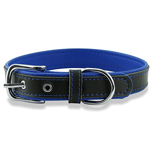 Epic Rogue Leather Dog Collar and Cat Collar