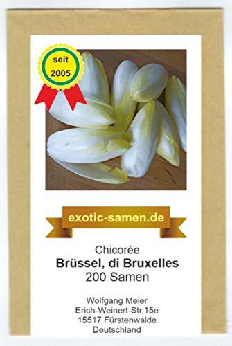 Chicorée - Chicoree - Brüssel, di Bruxelles - 200 Samen