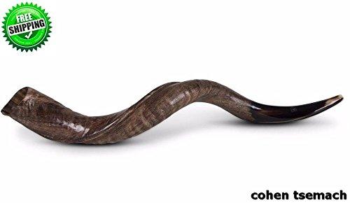 94–101,6cm Hälfte poliert ca. Kudu Yemenite Schofar Horn (Judaica Israel