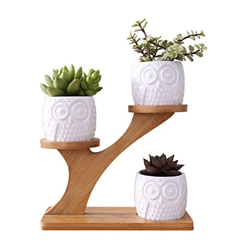 Youfui Creative Succulent Planter Flowerpot Decor Ornament for Home Office Desk (Owl Pot with stand)