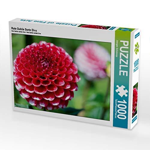 CALVENDO Puzzle Rote Dahlie Sorte Diva 1000 Teile Lege-Größe 64 x 48 cm Foto-Puzzle Bild von Juergen Schonnop