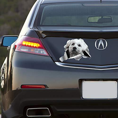DKISEE Calcomanía impermeable de vinilo de 6 pulgadas Shih Tzu Car Sticker, calcomanía de coche de perro, Shih Tzu decoración de coches, ventanas, espejos, ordenadores portátiles, dispositivos móviles