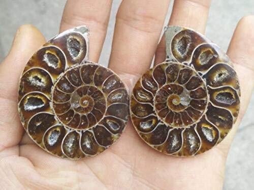 EIN Paar natürlicher Ammonit-Fossilien-Muschel Muschel Muschel Nautilus Pompiplius Ozean Jaspis Aquarium Steine Heilung 21Mm - 25Mm