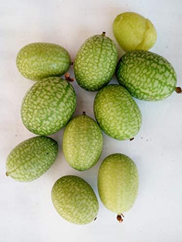 CUCAMELON 10 Semi Cetriolino Mini Messicano Insalate Aperitivo Melothria Scabra