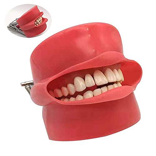 Modelos de Cubierta de cavidad de anatomía Dental, máscara de Silicona Modelo de Cabeza Fantasma Dental con Dientes fijos de Tornillo de 28 Piezas para el Aprendizaje de los Estudiantes