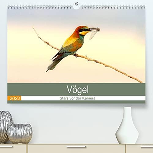 Vögel Stars vor der Kamera (Premium, hochwertiger DIN A2 Wandkalender 2022, Kunstdruck in Hochglanz)
