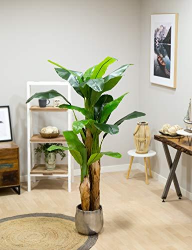 Maia Shop Plantas
