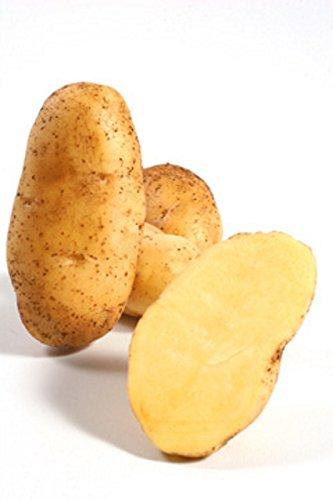 "5Kg Pflanzkartoffeln ""Linda"" Steckkartoffeln Saatkartoffeln Kartoffeln"