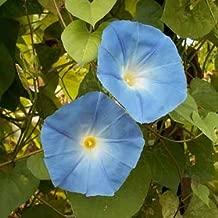 Outsidepride Morning Glory Heavenly Blue Seed - 1/4 LB