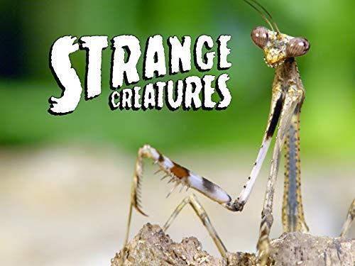 Strange Creatures - Season 2