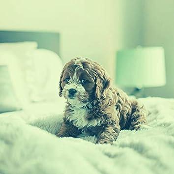 Perros - Encantador