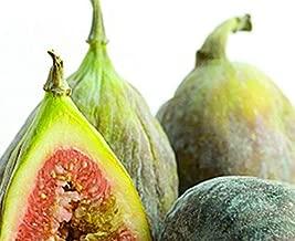 2.5 Inch Live Plant Fig Fruit Tree 'Brown Turkey' California San Pedro - WSR1111