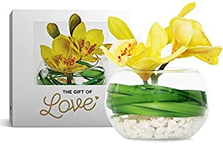 Orchid in Glass Bowl with White Pebbles (Soft Green) - Latex Real Touch Orchids- Hand Made-Petals Rich in Detail with Hand Painted Centres -Artificial Flowers- Gift Boxed