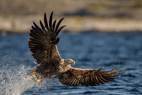 Puzzle Adultos De Madera Clásico Decoración águila pájaro depredador alas Agua Gotas de rocío Adultos Personalizado De Madera Montaje Rompecabezas Divertido-1000 Piezas