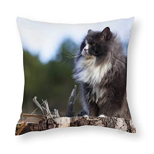 Funda de almohada decorativa de microfibra suave de Cat 1, elegante y elegante, 45 x 45 cm