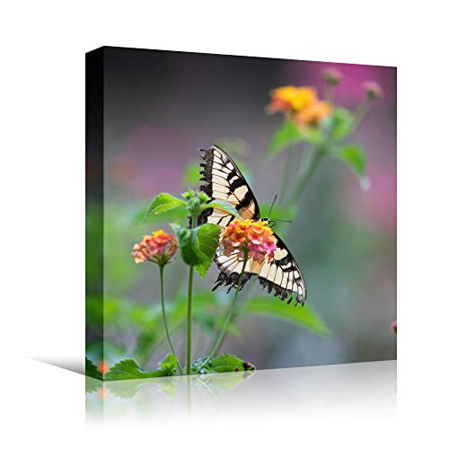 bestdeal depot Butterfly XXIV Expressive Farmhouse/Country Home Office Insects Lake Multicolor Photography Wall Art Prints for Living Room,Bedroom Ready to Hang - 12x12 inches