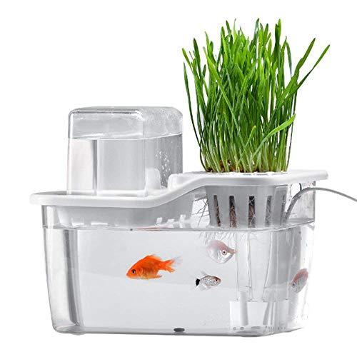 EQS Mini Aquarium pour Jardin Aquatique, Aquarium pour système de Culture Hydroponics avec des Choux Bio Aquaponic et Un kit de départ pour Aquarium aux Herbes Cadeau de Vacances pour Le père Mari
