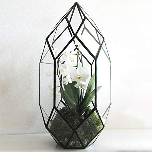 Geometric glass terrarium for display