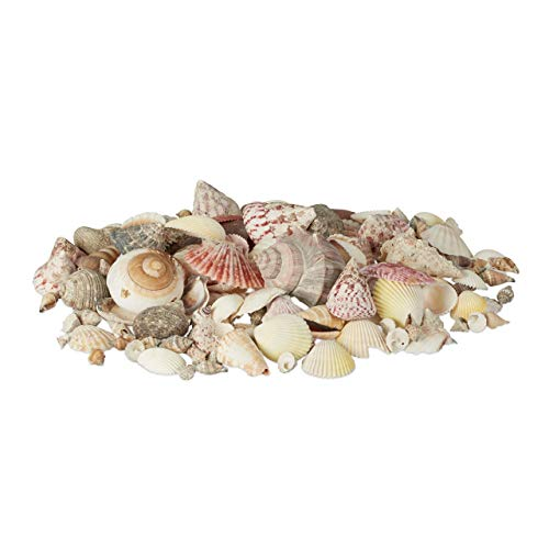 Relaxdays Pack de Conchas Marinas Verdaderas Mediano de Decoración o Manualidades, Caracolas, Multicolor, 18x18x11 cm