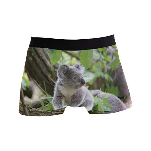 PINLLG Herren Boxershorts Koala Phascolarctos Bär, Polyester, Spandex Gr. S, Mehrfarbig