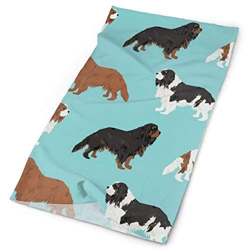 NA Leuke Hond Huisdier Honden Blemein Ruby Cavalier Zwart En Tan Hond Leuke Hond Jas Hond BreedFacial Hoofdband Make Up Wrap Hoofd Terry Doek Hoofdband Stretch Handdoek make-up Haarband Sport Yoga Douche