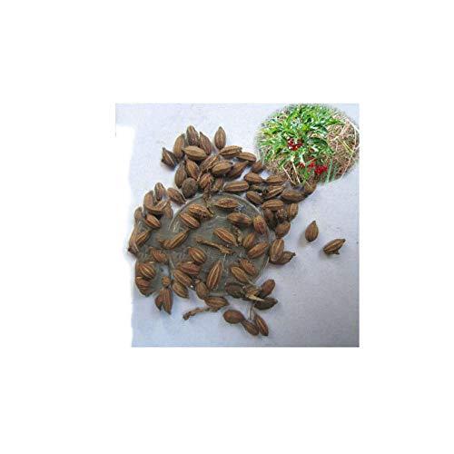 Semilla de árbol forestal Semilla de flor Semilla de leche 300 cápsulas