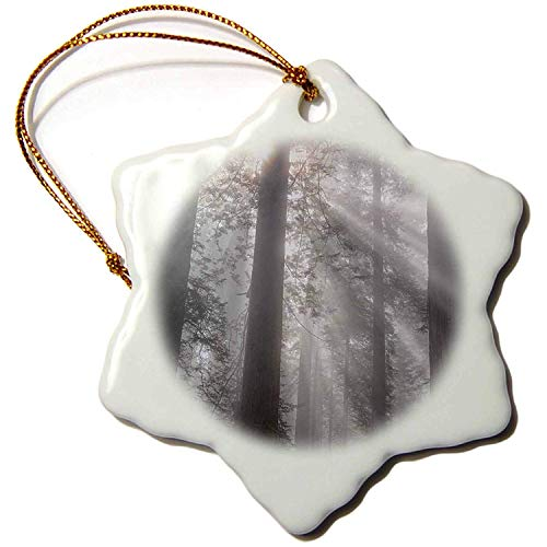 Leop345old Trees - California, Del Norte Coast Redwoods SP, redwoods with sunbeams - 3 inch Snowflake Porcelain Ornament 6