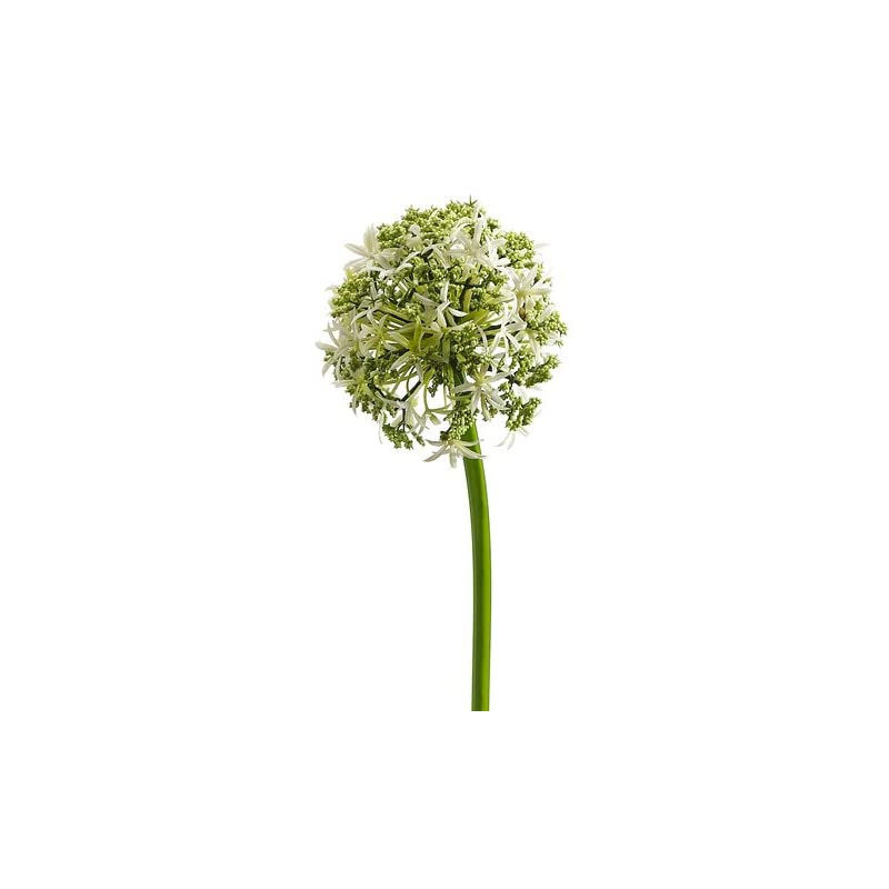 """silk flower arrangements 31"""" silk allium flower spray -cream (pack of 12)"""