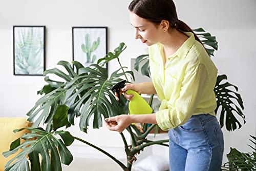 AMERICAN PLANT EXCHANGE Rhaphidophora Tetrasperma AKA Mini...