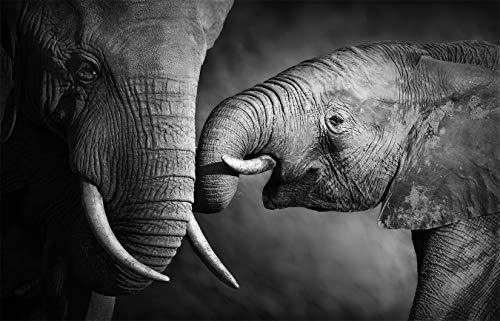 Fototapete selbstklebend | Elefanten - schwarz-weiß | in 155x100 cm | Bild-tapete Moderne Wand-deko Dekoration Wohnung Wohnzimmer Wandtapete | 501262