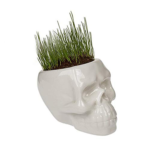 Mad Moonshine Pflanz-Schädel Grass Head - Totenkopf-Topf - inkl. Grassamen