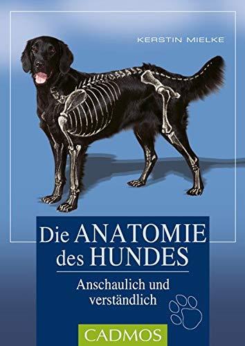 Die Anatomie des Hundes: Einfach und verständlich