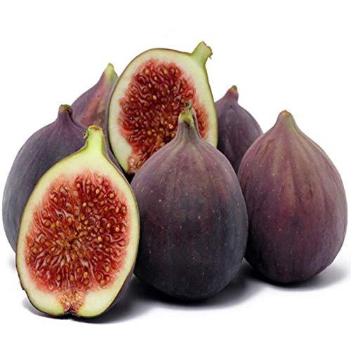 Plantas artificiales, semillas de frutas y verduras, 100 unidades por bolsa de semillas de higo, deliciosas y fragantes de frutas tropicales para la agricultura - semillas de higo