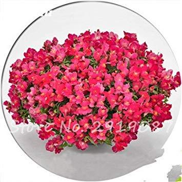 Vistaric Antirrhinum Majus Seeds Enano Complemento Multi Color Semillas de flores Jardín Hogar Bonsai Plantas en maceta Plantar 120 piezas 7