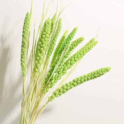 DORATA Home Decor Natural Dried Reed Tail Flowers Grass price Rabbit Max 74% OFF R