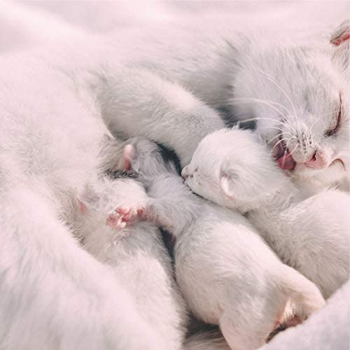 Official Pet Care Collection, Music for Cats Project & Music for Resting Cats